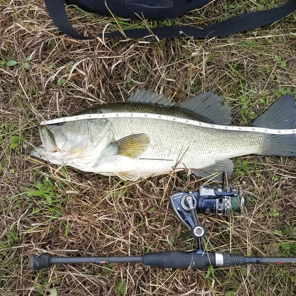 4.06 lbs / 20 in Largemouth bass caught by Arch Graham