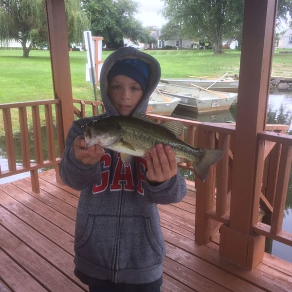 3.13 lbs / 15 in Spotted bass caught by Rachel  fossani