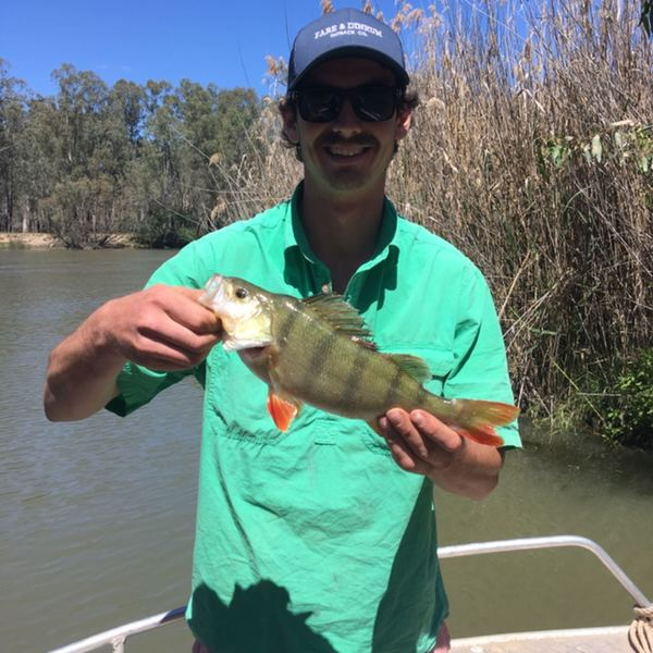 11 in European perch caught by max  Lawrence