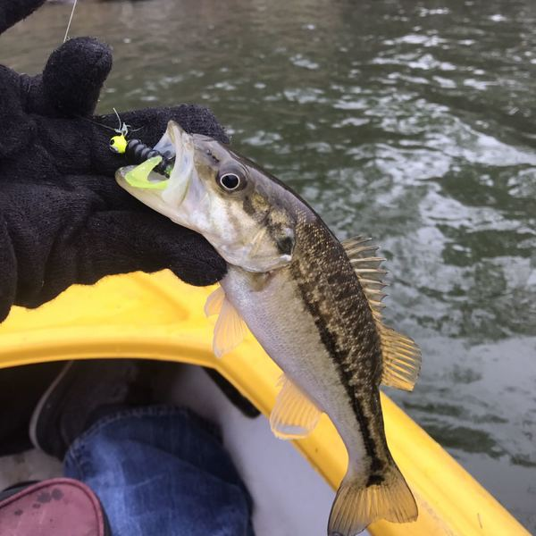 Spotted bass caught by Jake Lemley