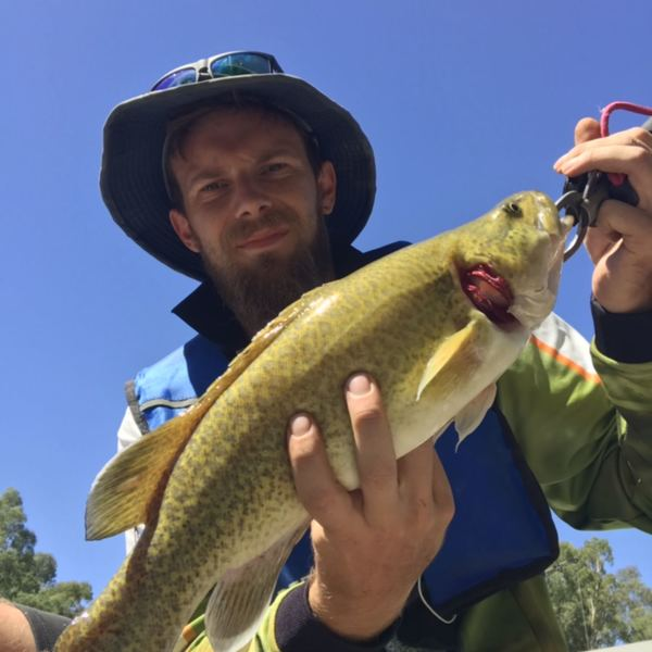 19 in Murray cod caught by Jesse Stone