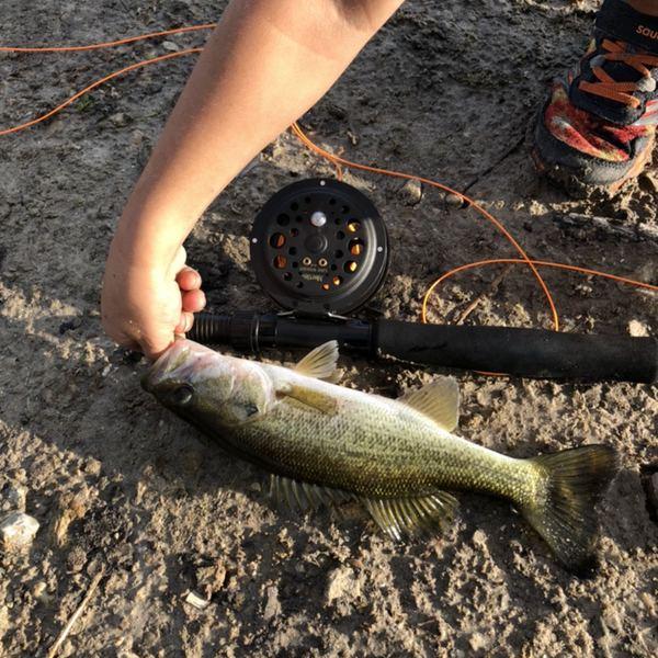 Largemouth bass caught by Josiah  tolbert
