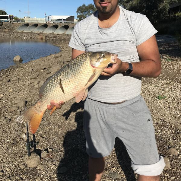 15 lbs / 25 in Common carp caught by Nus Nesatov