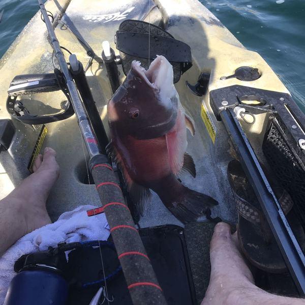 4 lbs / 18 in California sheephead caught by John Reed