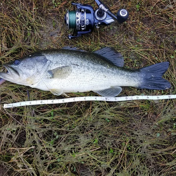 1.38 lbs Largemouth bass caught by Arch Graham