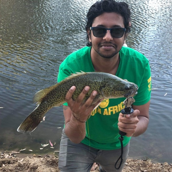 19 in Murray cod caught by Triv Naidoo