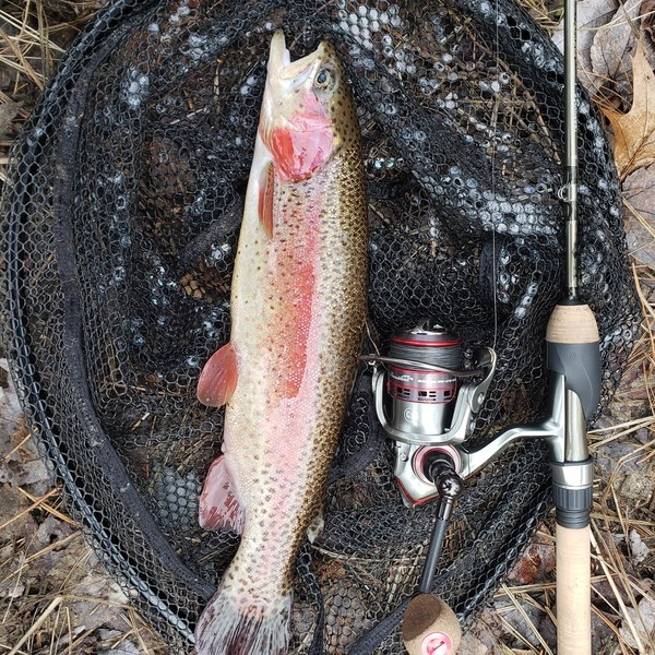 Rainbow trout caught by J E