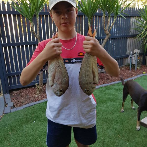 Australasian snapper caught by jhy Lay