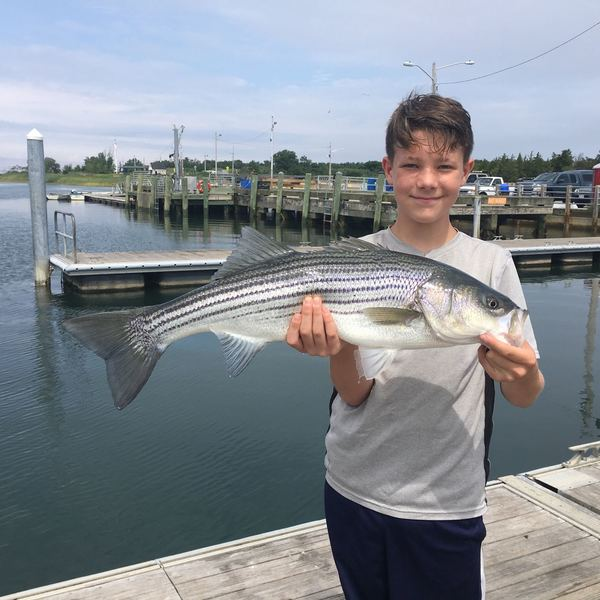 28 lbs / 39 in Striped bass caught by Anthony Mele