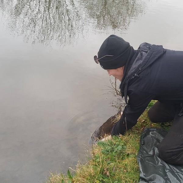8.56 lbs Mirror carp caught by Jonny Evans