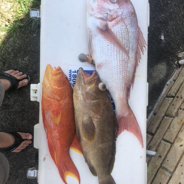 Australasian snapper caught by Max Azzarello
