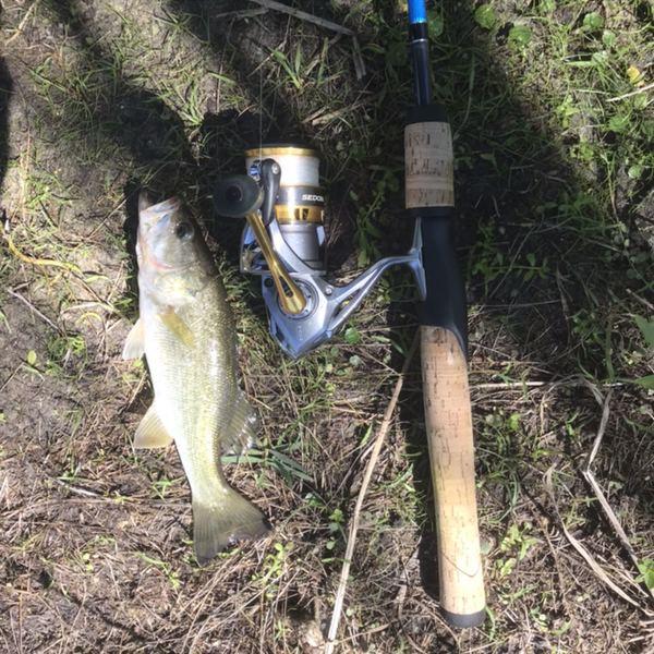 Largemouth bass caught by Jamel Salem