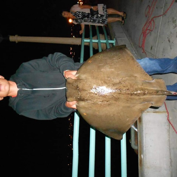 75.44 lbs / 37 in Haller's round ray caught by Jose Lopez