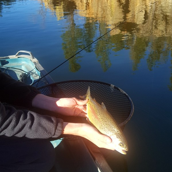 17 in Brown trout caught by Eric Fisher