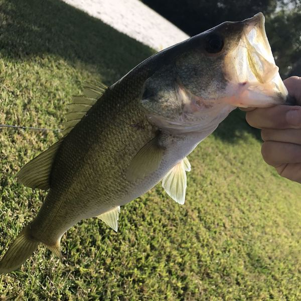 2.56 lbs  caught by luke ford