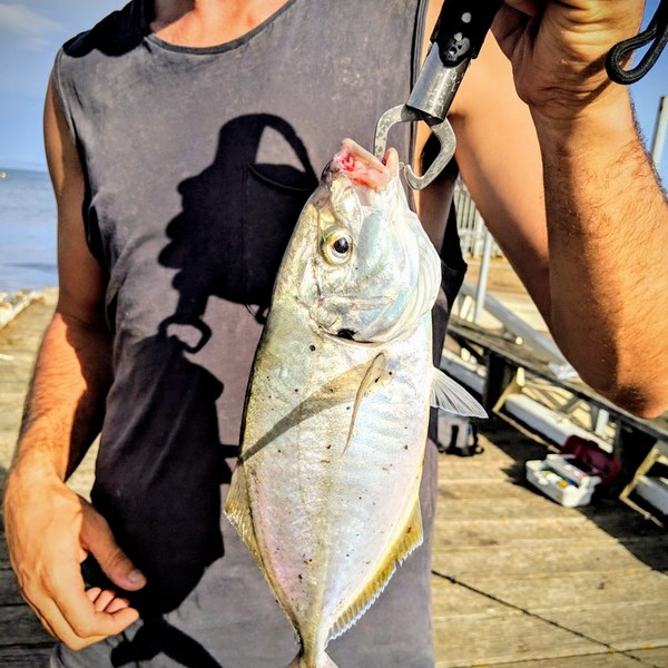 13 in White trevally caught by Danny Richardson