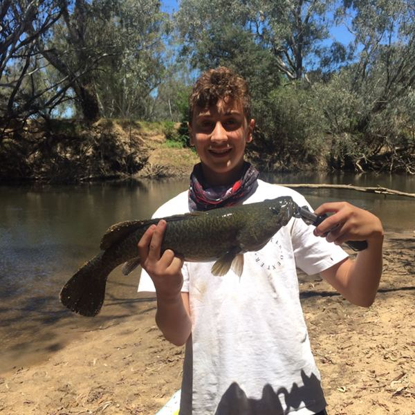 19 in Murray cod caught by Spencer  Jones