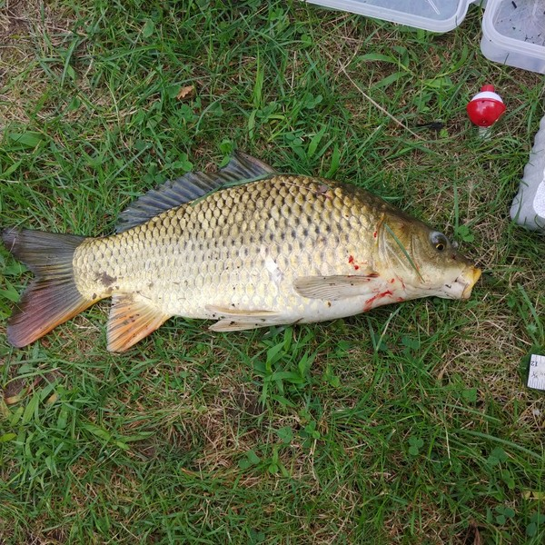 1 lbs / 13 in  caught by Theo Cegelski