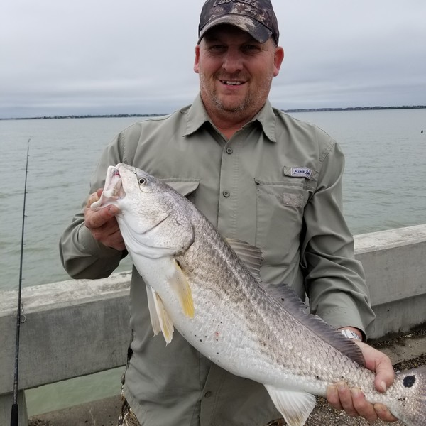 29 in Red drum caught by bobby hindman