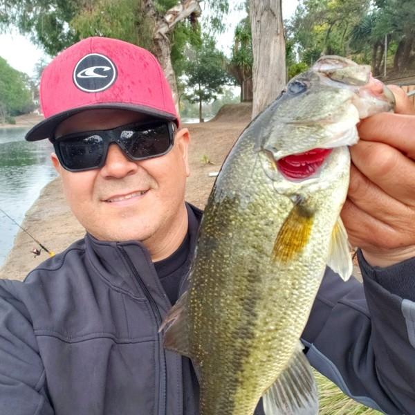 1.56 lbs Largemouth bass caught by Eddie Jara
