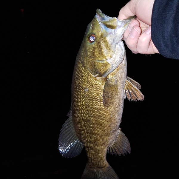 Smallmouth bass caught by mike whyte