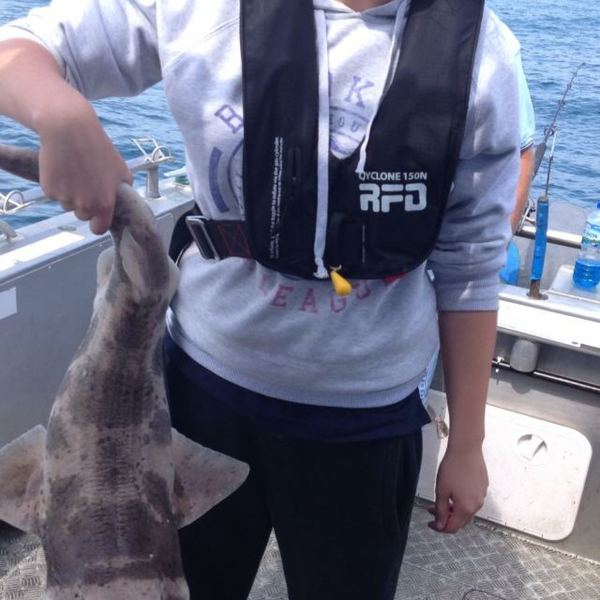 Port Jackson Shark caught by Grace Anstis