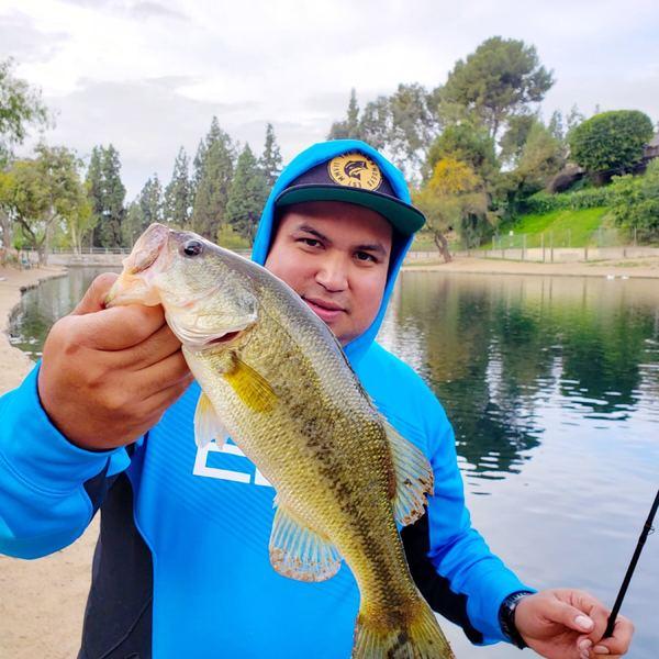 1.5 lbs Largemouth bass caught by Ramon  Villegas